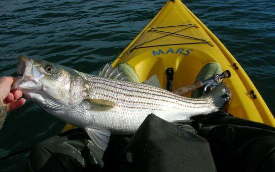 Tips on Choosing the Right Fishing Kayak
