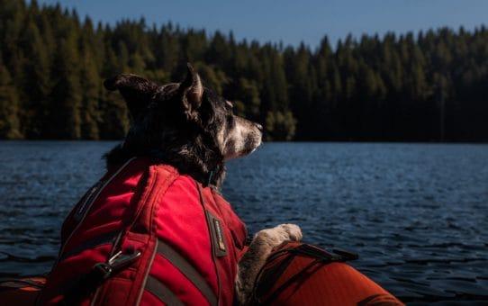 Kayaking & Dogs